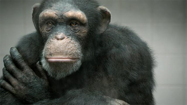 PETA &quot;98% HUMAN&quot;&lt;br /&gt;&lt;br /&gt;<br /> TVC :30