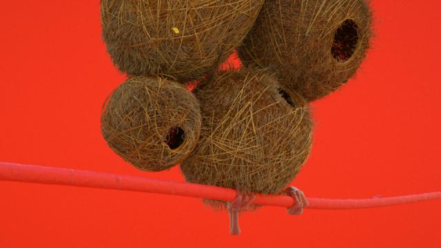 Birds and Comme des Garçons Get Zeitguised