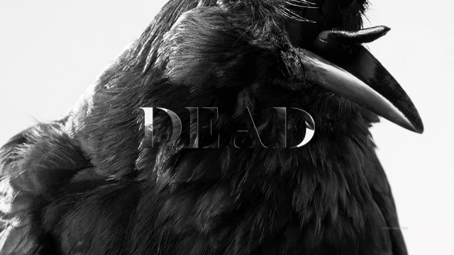 Sami Fitz Dead Birds music video | STASH MAGAZINE