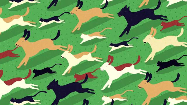 YORA - What's your pet's carbon pawprint? Yukai Du Bliink   STASH MAGAZINE