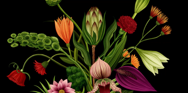 Story of Flowers animated short film by James Paulley | STASH MAGAZINE