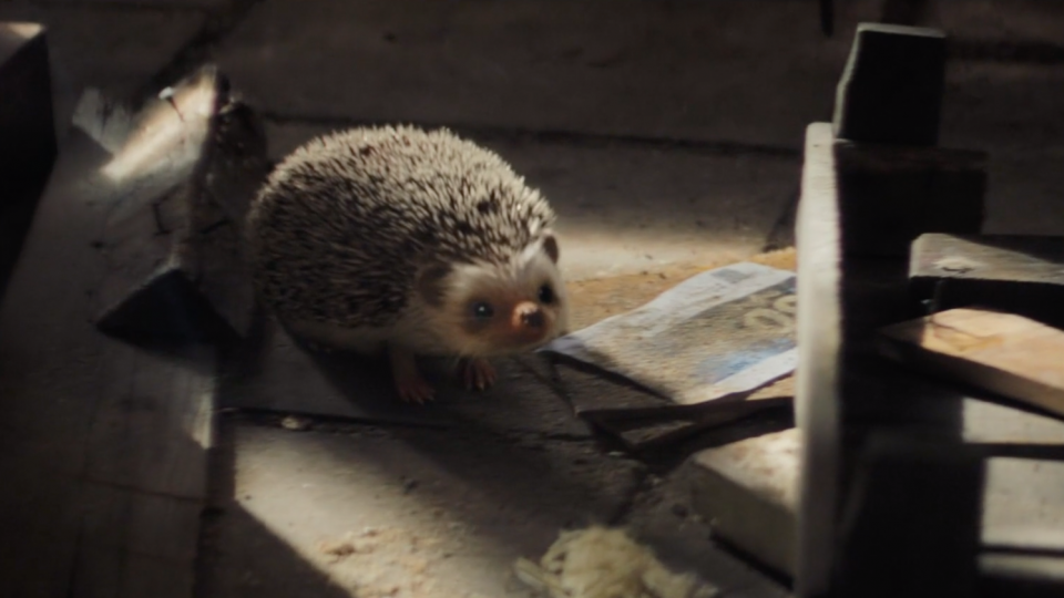 Staatsloterij New Years Lottery: Freddie the Hedgehog | STASH MAGAZINE