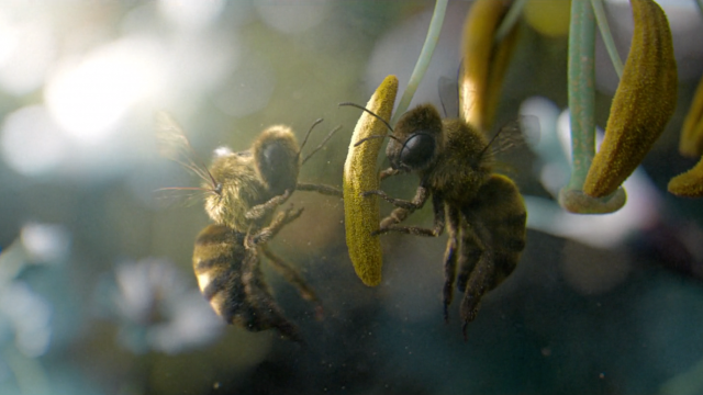 "Vittel ""Biodiversité"" Campaign by Mikros MPC | STASH MAGAZINE"