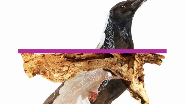 Sami Fitz Dead Birds music video | STASH MAGAZINE