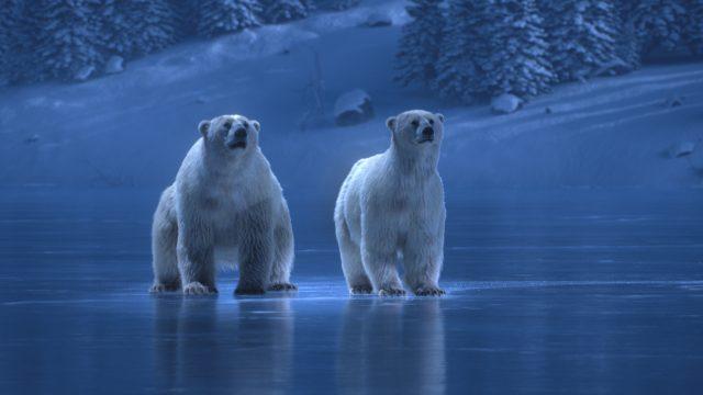 ITV Polar Bears dancing on ice   STASH MAGAZINE