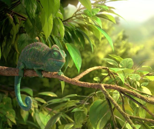 Wonderful Nature Chameleon| STASH MAGAZINE