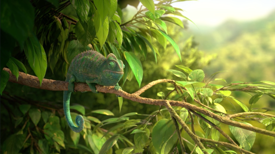 Wonderful Nature Chameleon| STASH MAGAZINE
