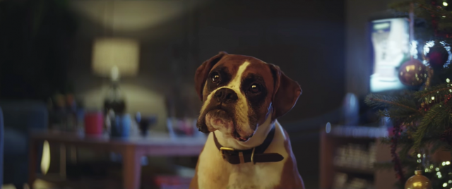 john-lewis Buster the boxer | STASH MAGAZINE
