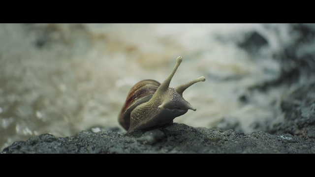 "AG Rojas and MPC: Samsung ""Surf – The Snail"""