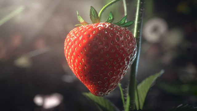 Beware the Great White Shark of Strawberries