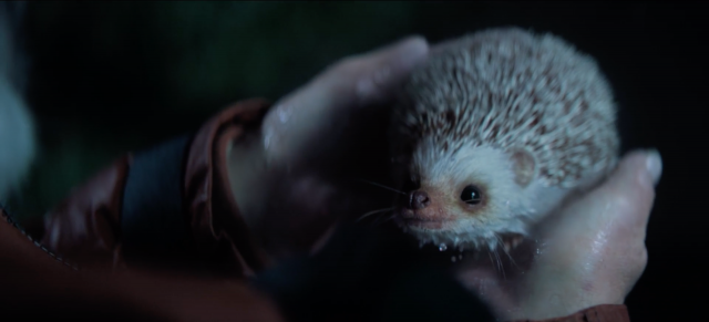 Staatsloterij New Years Lottery: Freddie the Hedgehog   STASH MAGAZINE