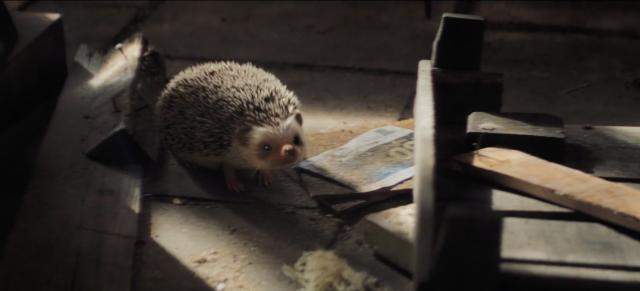 Staatsloterij New Years Lottery: Freddie the Hedgehog | STASH MAGAZINE