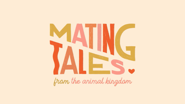 Mating Tales from the Animal Kingdom | STASH MAGAZINE