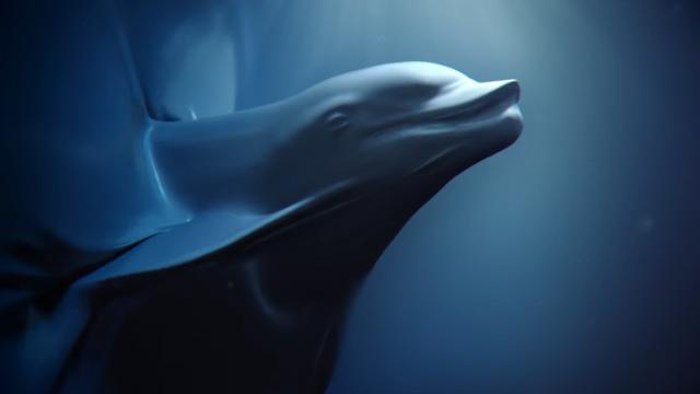 Alkemy X Sea Shepherd Plastic Ocean PSA Fred & Farid   STASH MAGAZINE