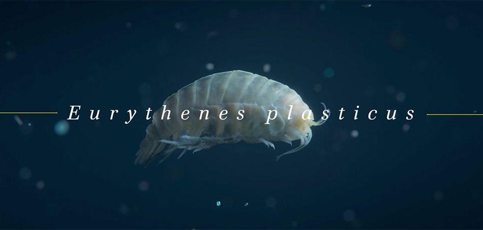 WWF Eurythenes Plasticus by Sehsucht | STASH MAGAZINE