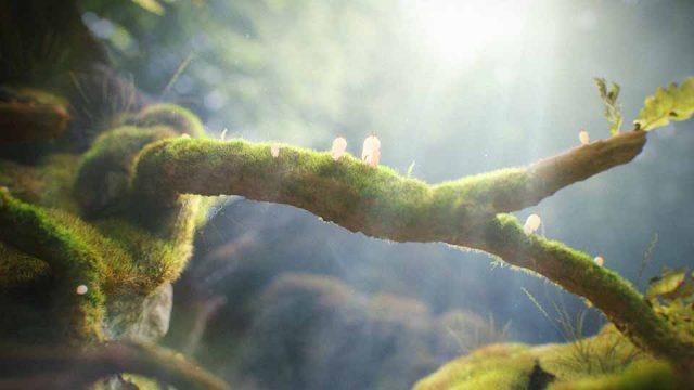 """""""Forest"""" Short Film by Sasha Vinogradova   STASH MAGAZINE"""